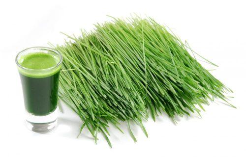 J'ai testé pour vous : le Jus d'herbe de blé