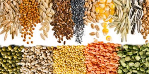 Comment remplacer la viande sans manquer de protéines?