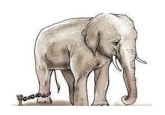 L'éléphant enchaîné !