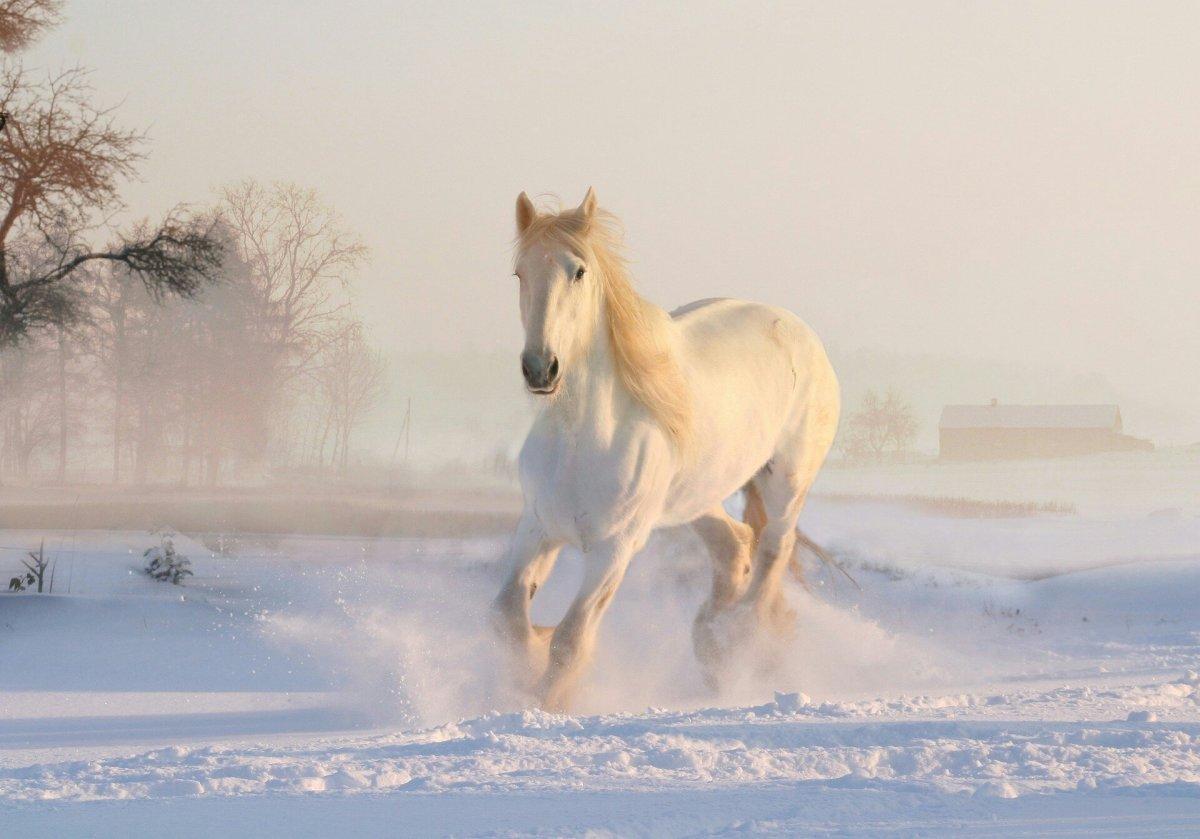 Le vieux paysan et son cheval blanc!
